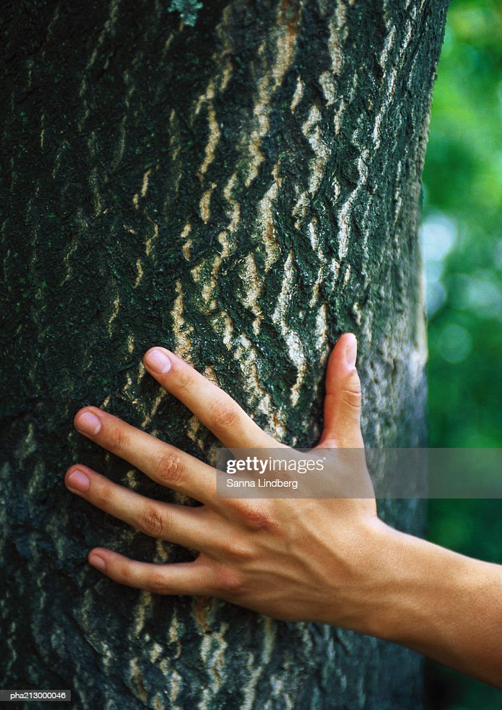 Portrait of hand touching tree : Stockfoto