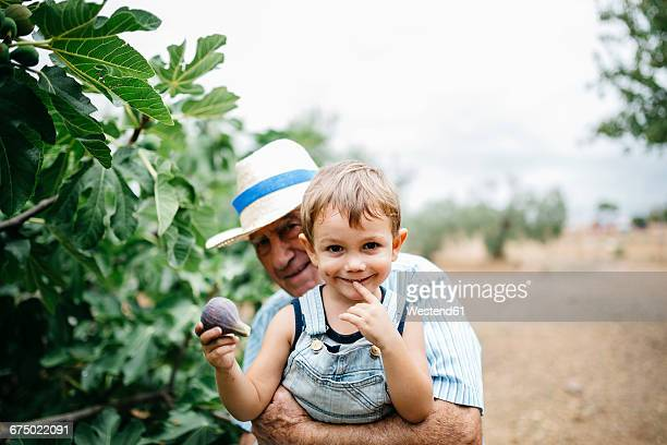 Portrait of happy little boy picking figs with his great-grandfather