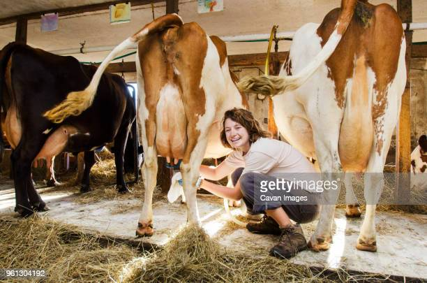 portrait of happy woman milking cow - milking stock pictures, royalty-free photos & images