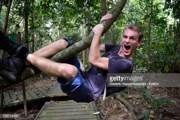 portrait of hiker hanging from branch in forest - taman negara national park stock photos and pictures