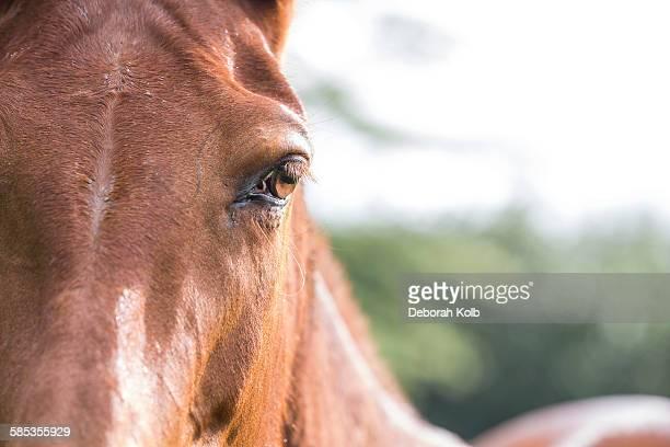 Portrait of horse, close-up
