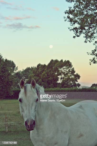 portrait of horse on field against sky - cambridge new zealand stock pictures, royalty-free photos & images