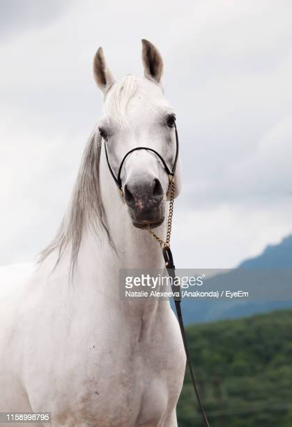 portrait of horse standing against cloudy sky - herbivorous stock photos and pictures