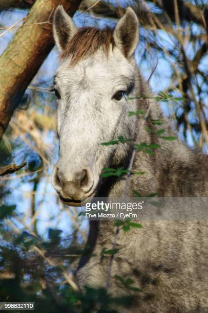 Portrait Of Horse Standing By Plants