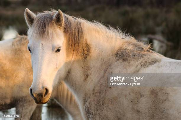 Portrait Of Horse Standing Outdoors