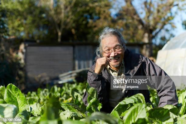 Portrait of Japanese senior farmer on his farm
