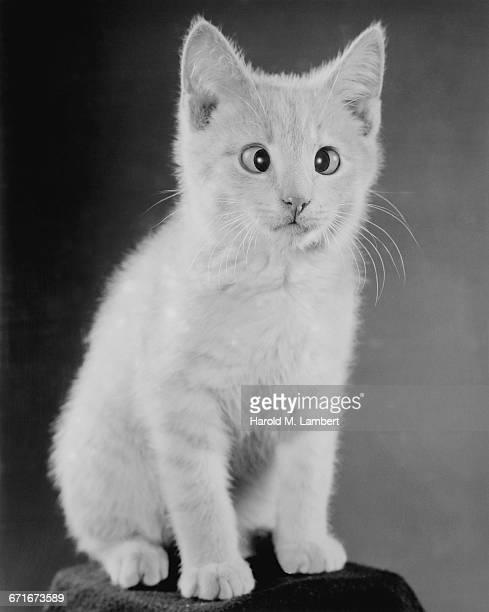 portrait of kitten sitting on stool - mamífero con garras fotografías e imágenes de stock