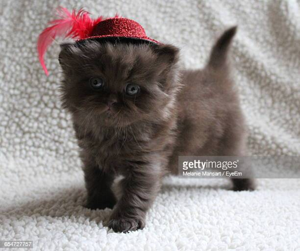 Portrait Of Kitten Wearing Red Hat While Standing On Rug