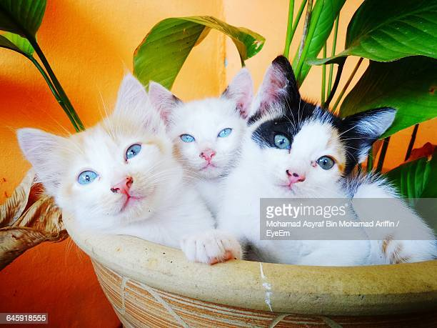 portrait of kittens in potted plant - carnivora stock photos and pictures