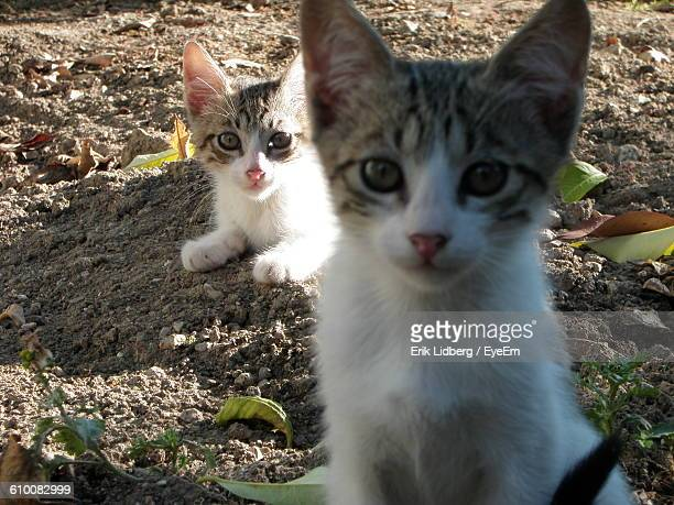 Portrait Of Kittens On Field