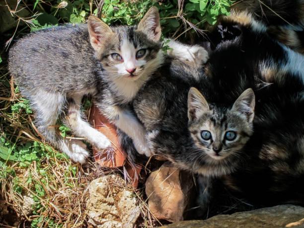 Portrait of kittens on field,Damascus,Syria