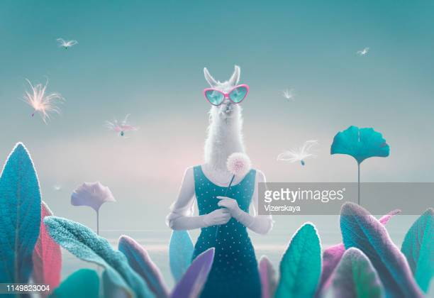 portrait of lama-women in surreal landscape - surreal stock pictures, royalty-free photos & images