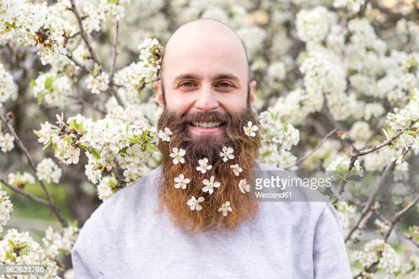 portrait of laughing hipster with white tree blossoms in his beard - barba peluria del viso foto e immagini stock