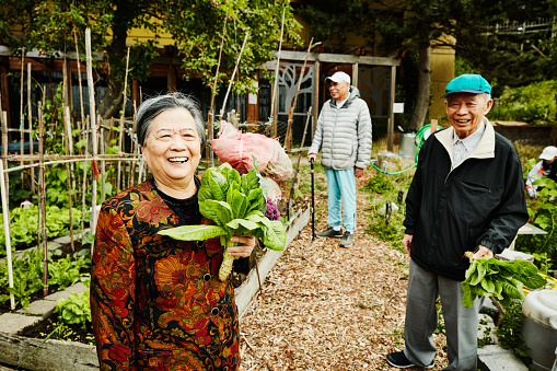 Portrait of laughing senior woman holding freshly picked greens in community garden - gettyimageskorea