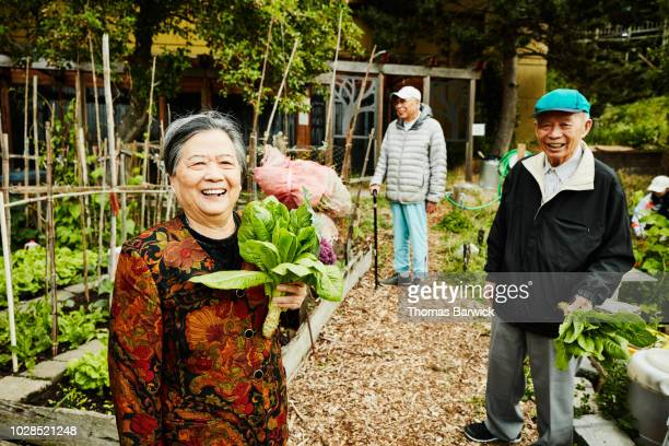 portrait of laughing senior woman holding freshly picked greens in community garden - 90 plus years stock pictures, royalty-free photos & images