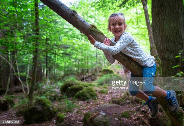 Portrait of little girl climbing on tree in the woods