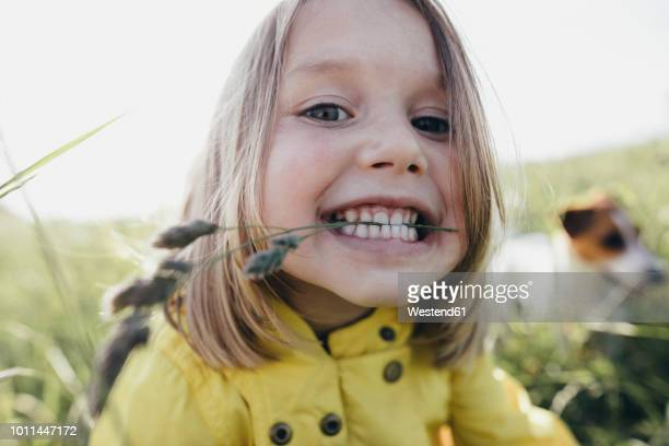 portrait of little girl on a meadow holding blade of grass with her teeth - kindheit stock-fotos und bilder