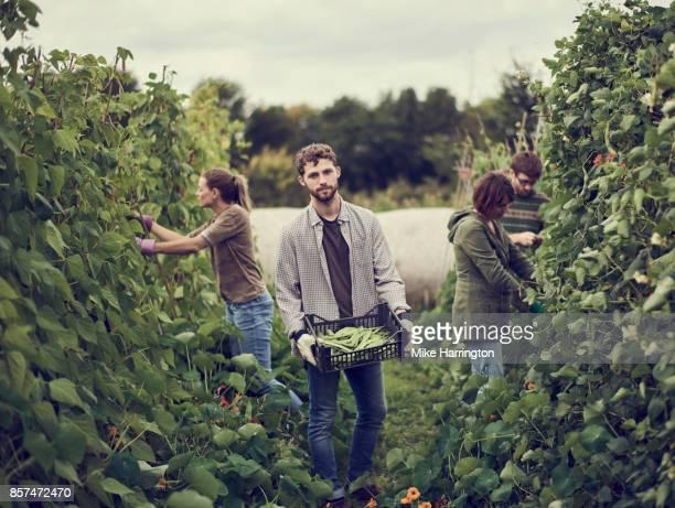 portrait of male holding organic produce in community allotment - mid adult men imagens e fotografias de stock