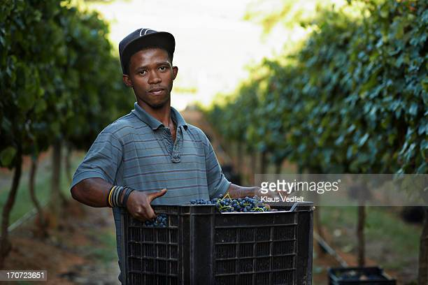 Portrait of male worker carrying box on vinyard