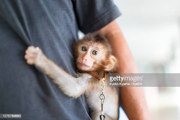 portrait of man holding monkey - monkey man stock pictures, royalty-free photos & images