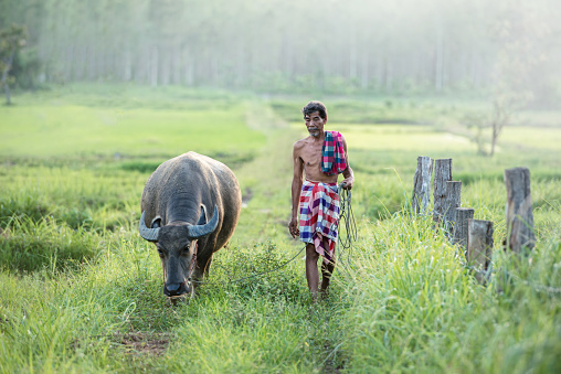 Portrait of man walking with buffalo and holding him on rope, Thailand - gettyimageskorea