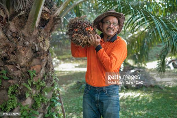 portrait of man wearing hat holding palm fruit standing by tree - palm oil stock pictures, royalty-free photos & images