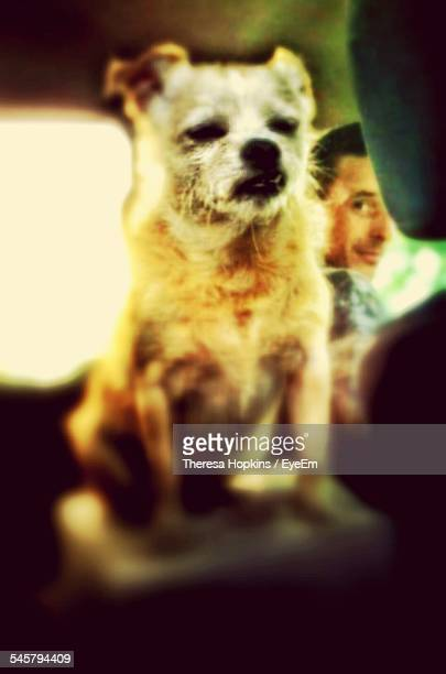 Portrait Of Man With Dog In Car