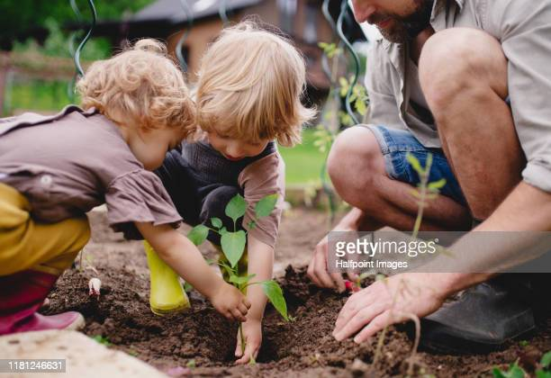 a portrait of mature father with small children outdoors gardening. - image stock pictures, royalty-free photos & images