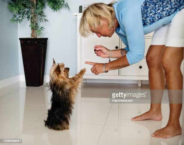 portrait of mature lgbtq women giving a treat to her dog. - yorkshire terrier stock pictures, royalty-free photos & images