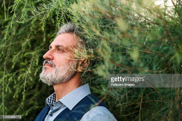 a portrait of mature man relaxing in greenhouse, green business concept. - sustainability stock pictures, royalty-free photos & images