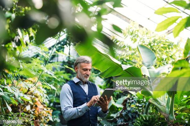 a portrait of mature man with tablet standing in greenhouse, green business concept. - ecosystem stock pictures, royalty-free photos & images