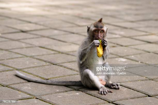 Portrait Of Monkey Eating Food