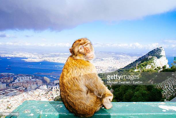 portrait of monkey sitting on retaining wall against cloudy sky at gibraltar - rock of gibraltar stock photos and pictures