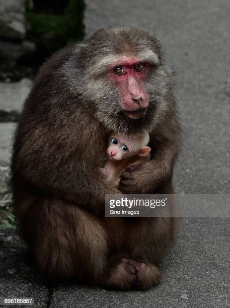 Portrait of monkey with baby