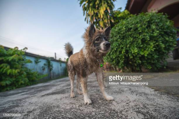 portrait of mutt dog - mongrel dog stock pictures, royalty-free photos & images