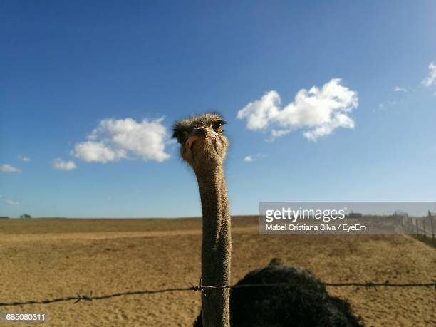 Portrait Of Ostrich Against Sky