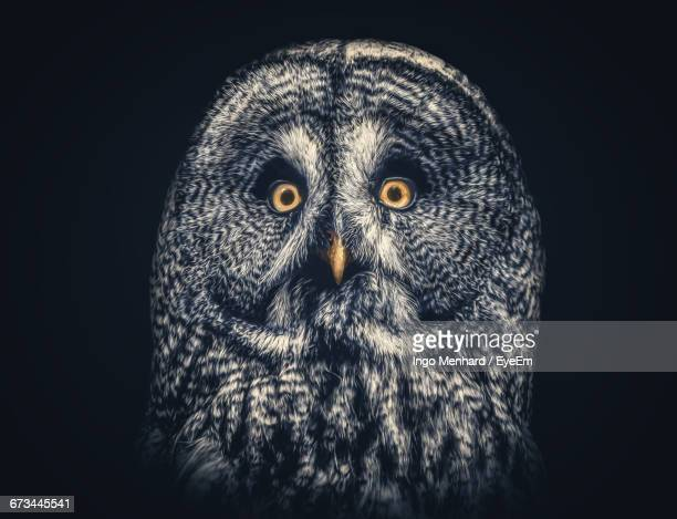 Portrait Of Owl Against Black Background