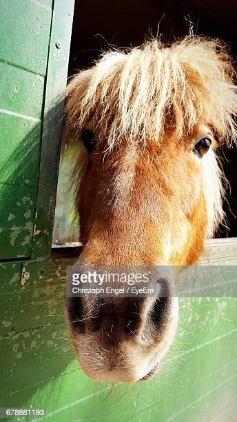 Portrait Of Pony At Stable