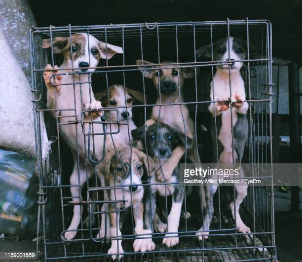 portrait of puppies in cage outdoors - trapped stock pictures, royalty-free photos & images