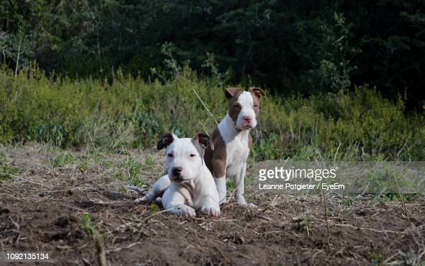 Portrait Of Puppies On Field