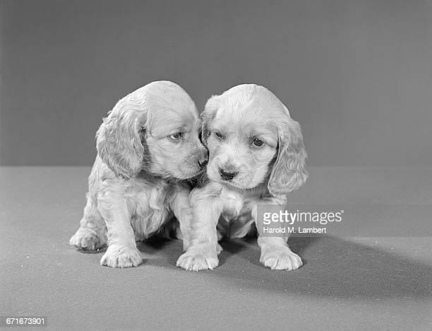 portrait of puppies sitting together - mamífero con garras fotografías e imágenes de stock