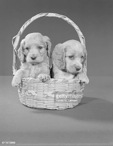portrait of puppy sitting in basket - mamífero con garras fotografías e imágenes de stock