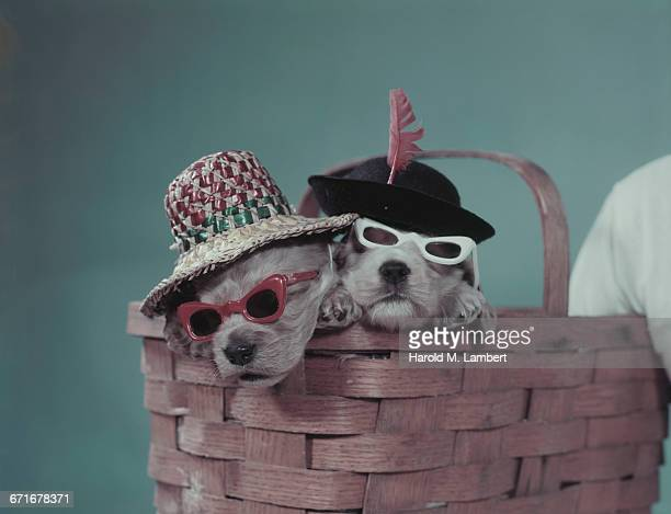 Portrait Of Puppy Sitting In Basket .