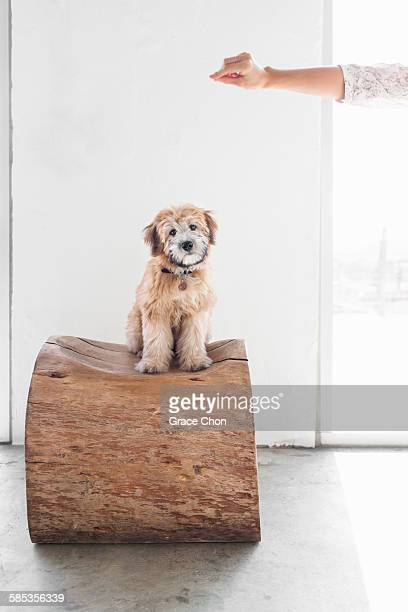 Portrait of puppy sitting on tree trunk seat