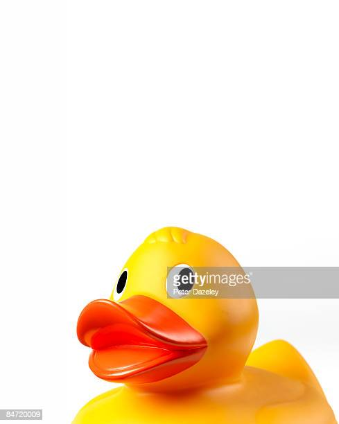 portrait of rubber duck. - rubber duck stock pictures, royalty-free photos & images