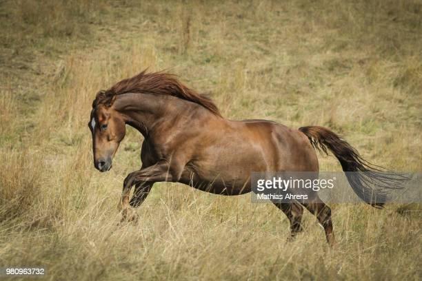 Portrait of running horse