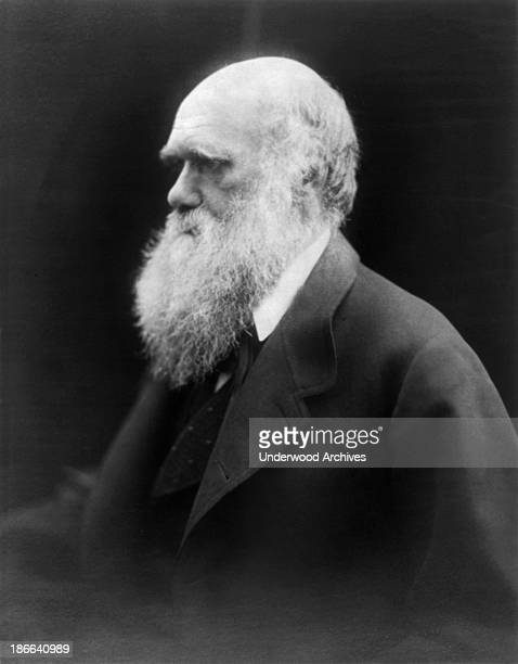 A portrait of scientist and naturalist Charles Darwin by Julia Margaret Cameron United Kingdom late 1860s or early 1870s
