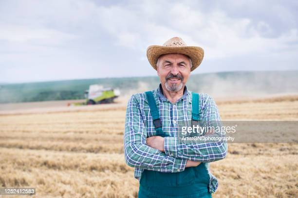 portrait of senior farmer controlled wheat harvesting on agriculture field. - agronomist stock pictures, royalty-free photos & images