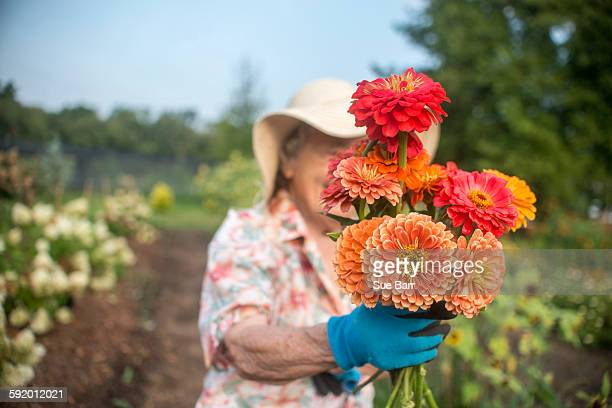 portrait of senior female farmer holding a bunch of fresh cut flowers - abundance stock pictures, royalty-free photos & images