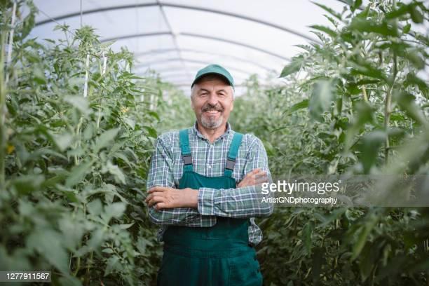 portret van hogere mannelijke landbouwer in zijn serre - alleen seniore mannen stockfoto's en -beelden